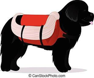 Newfoundland dog lifesaver