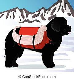 Newfoundland dog lifesaver in mountains