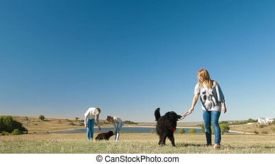 Newfoundland Dogs - People with Newfoundland dogs playing on...