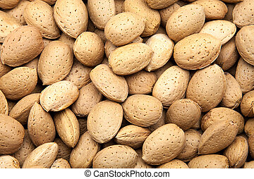 newly harvested almonds