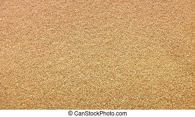 newly harvested wheat