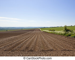 newly planted potato crop