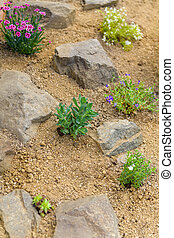 Newly planted rockery garden. Rock garden background with sedum, dianthus, phlox and succulent rossete flowers.