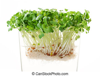 newly sprouted radish seeds - nutritious sprouts full of ...
