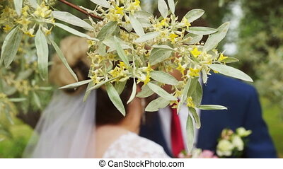 Newlyweds kiss behind a branch of a flowering tree -...