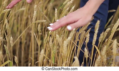 newlyweds touch the ears of wheat