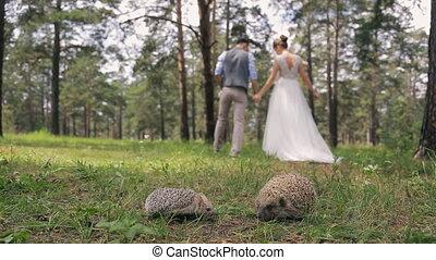 Newlyweds walk on wood holding hands near sweet hedgehogs....
