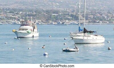 Newport beach harbor, weekend marina resort with yachts and ...