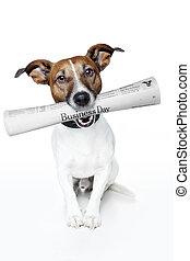 news dog - dog bringing the news