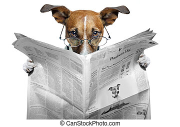 news dog - dog reading news with glasses