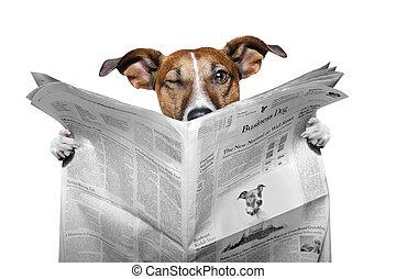 news dog - dog reading the news