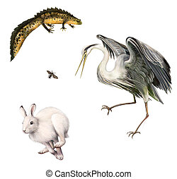 Newt, Hare, Fly, Grey Heron. Isolated realistic illustration...