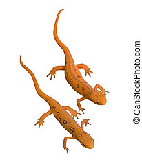 Newts with Clipping Path