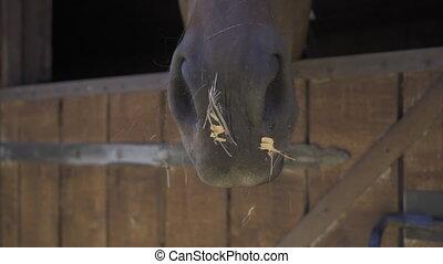 nez, stalle, cheval, 4k, ou, hippotherapy, élevé, ranch, ...