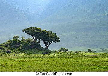 ngorongoro, 中, タンザニア, 噴火口