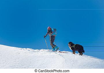 niña, esquí, alpinista, montaña, sal, solamente, con, el suyo, perro, perro montaña bernese