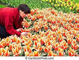 niña, tomar cuidado de, tulipanes, en, keukenhof, jardín