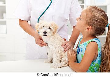 niña, y, ella, velloso, mascota, en, el, veterinario