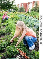 niñas jóvenes, trabajando, en, jardín vegetal