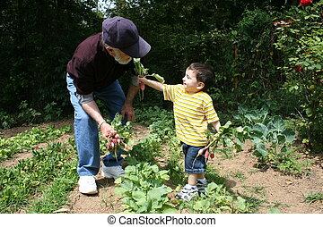 niño, abuelito, jardín