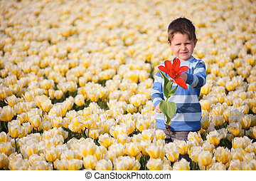 niño, en, campo de tulipán