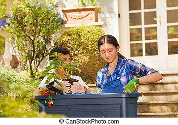 niño, niña, fresas, contenedor, plantación