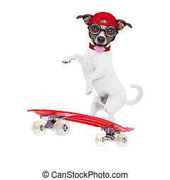 niño, perro, patinador