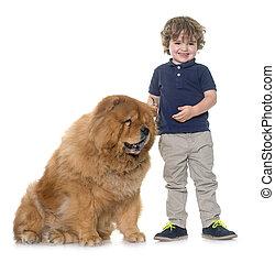 niño, poco, perro, chow-chow