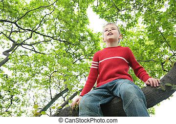 niño, se sienta, árbol