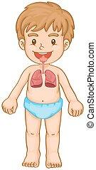 niño, sistema respiratorio, humano