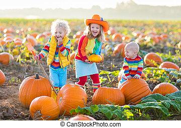 niños, halloween, remiendo, calabazas, escoger, calabaza