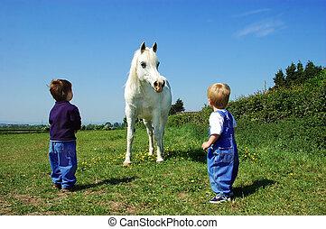 niños, y, un, caballo