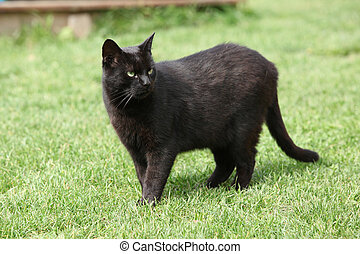 Nice black cat in the garden