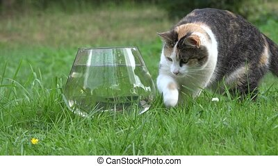 Nice cat catch fish from plastic bowl with water and run....