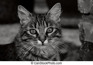 Nice cat looking at the camera