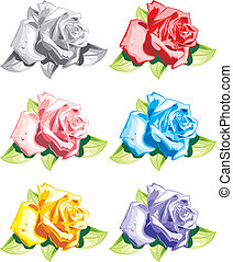colour roses on the white background