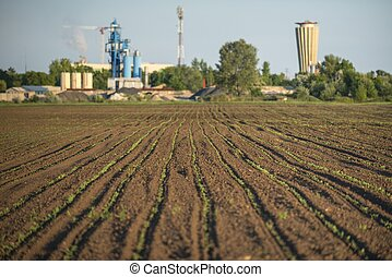 Cultivated land - nice Cultivated land with plants closeup...