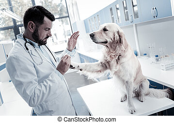 Nice cute dog looking at the doctor