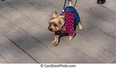 nice dog clothing