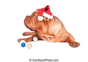 Nice dog ready for Christmas celebration