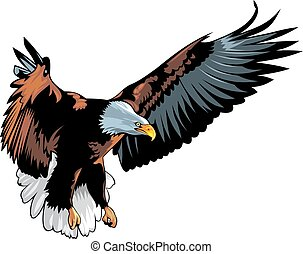 nice eagle isolated on the white background