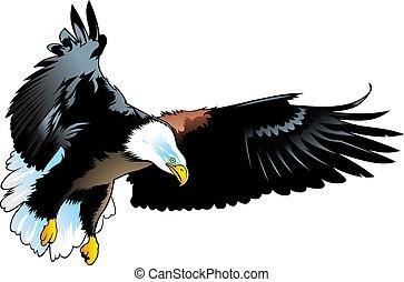 nice eagle - nice illustrated eagle isolated on white...