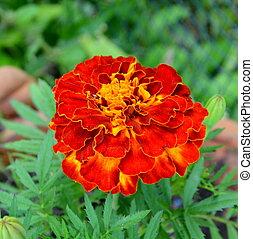 Nice flower in the garden
