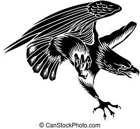 eagle - nice flying eagle on the white background