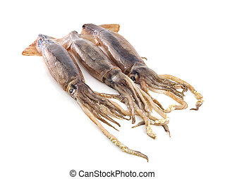 nice fresh squid isolated on white background