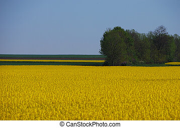 rape field and forest