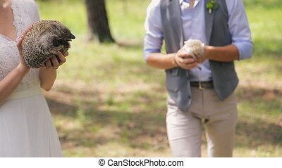 Nice hedgehogs in hands of newlyweds on photosession in wedding day