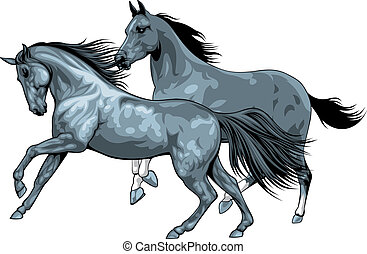 nice horses isolated