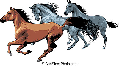 nice horses isolated on the white background