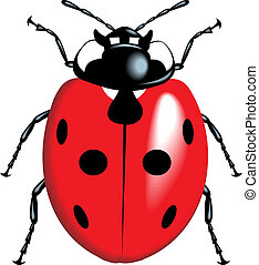 lady bug - nice lady bug isolated on white background